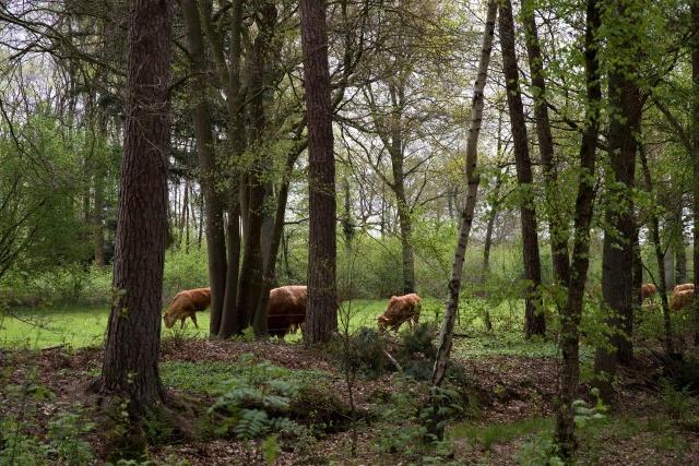 Achterhoek Gelderland Vakantie Boerderij In De Natuur Op Landgoed Zelle 37