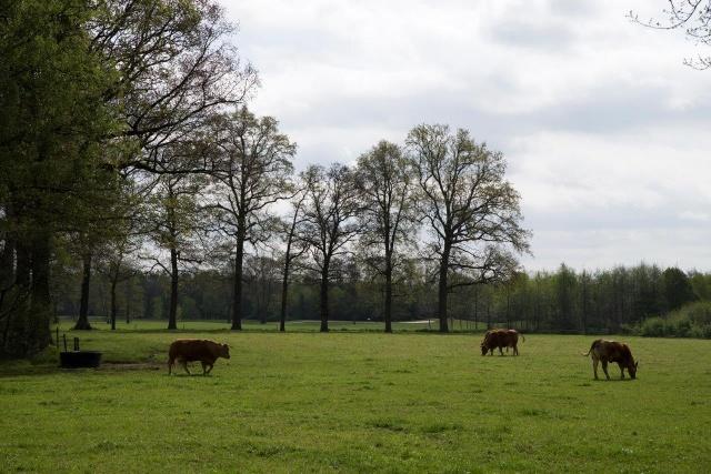 Achterhoek Gelderland Vakantie Boerderij In De Natuur Op Landgoed Zelle 72