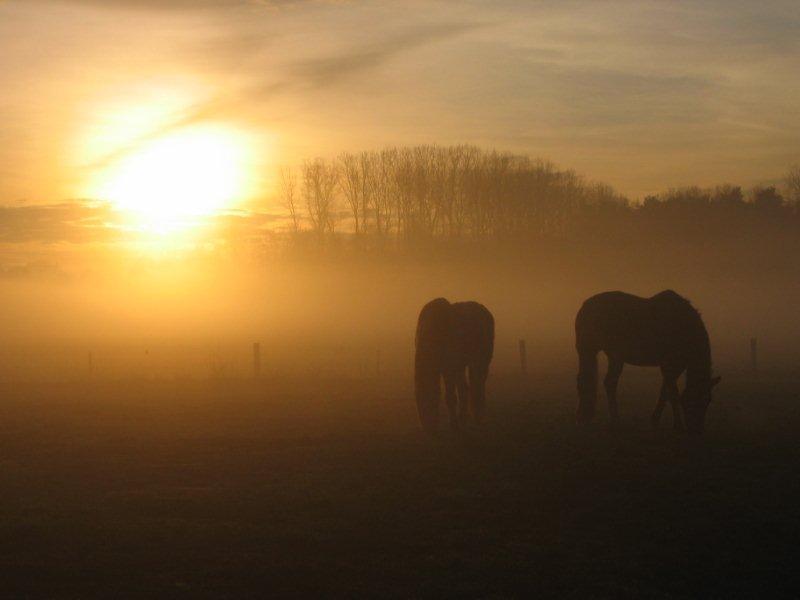 Achterhoekse natuur, paarden in de ochtendzon
