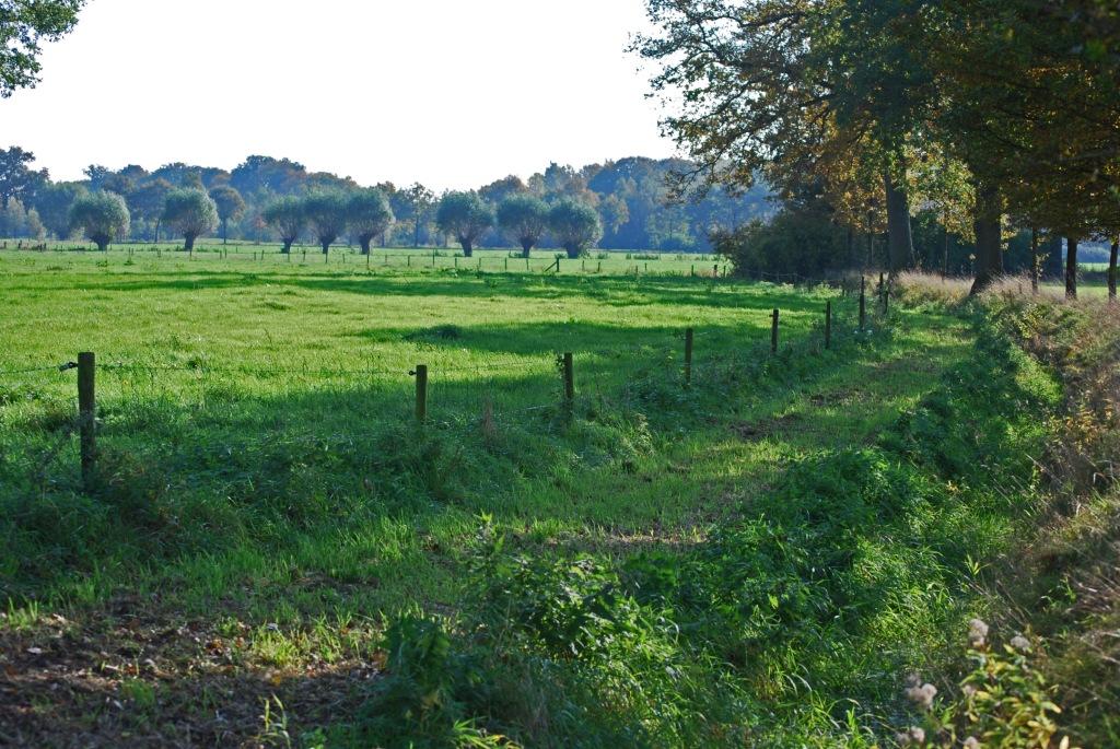 natuur pad Denneveld