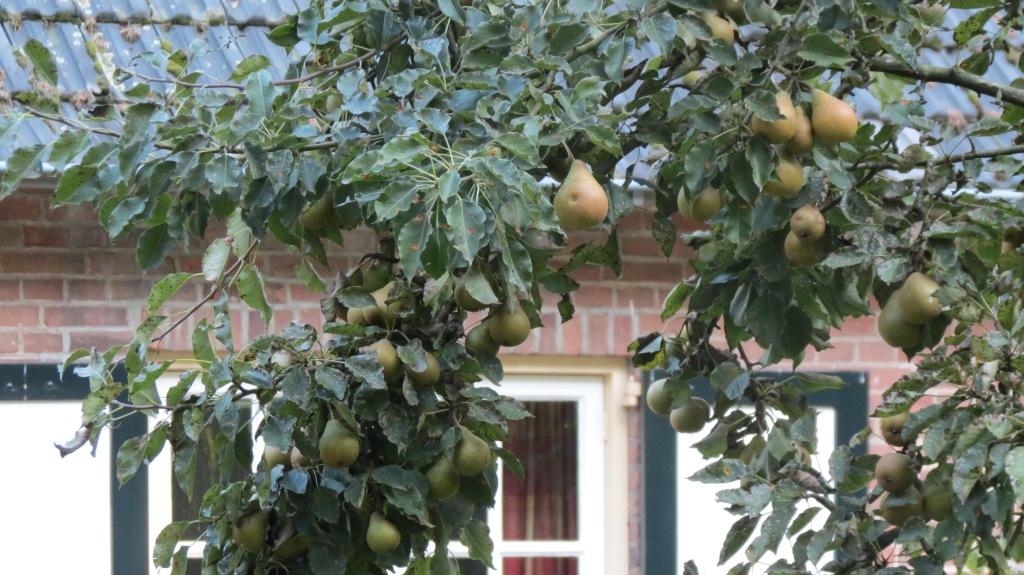 peren voor agadir